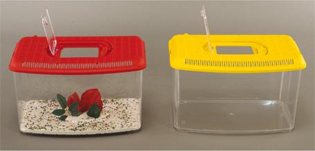 Ebay for Pesci per acquario piccolo